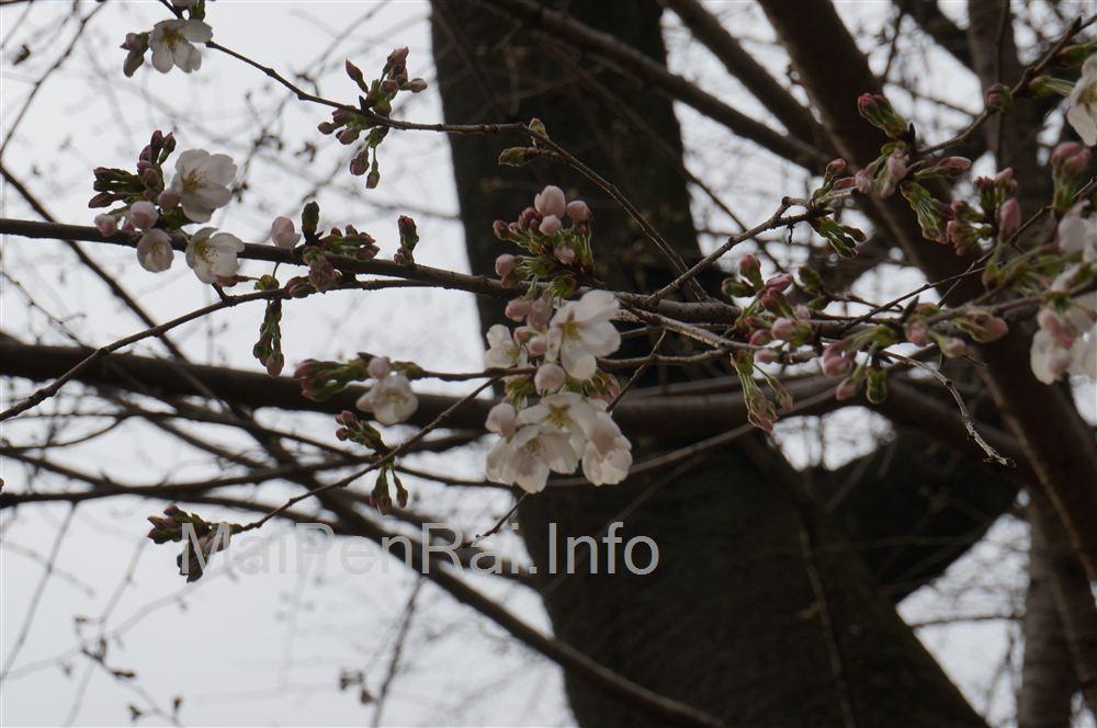 http://blog.maipenrai.info/photo_lib/p2013/DSC01785.jpg