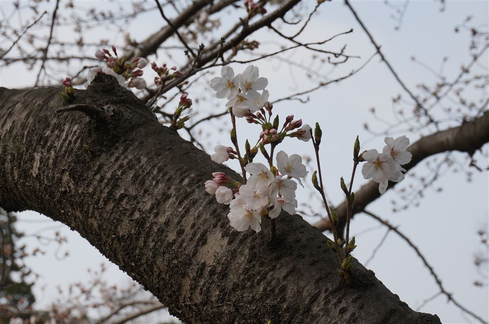 http://blog.maipenrai.info/photo_lib/p2013/DSC01865.jpg